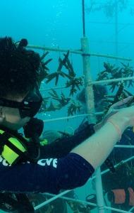 SCUBA Challenge - 27 JUNE - Reef Restoration