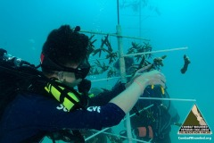 SCUBA Challenge - 27 JUNE - Reef Restoration