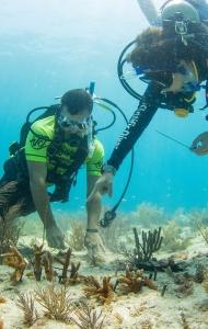 SCUBA Challenge 2017 - Reef Restoration