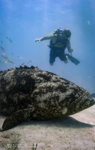 combat-wounded-veteran-scuba-challenge-14