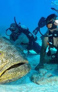 SCUBA Challenge - 25 JUNE - Recreational Dives