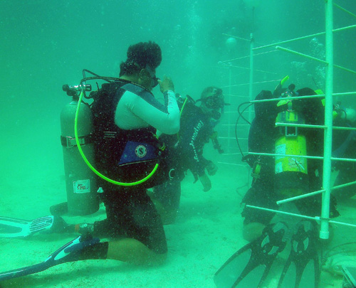 In the News: Wounded veterans aid coral farm, prosthetic research