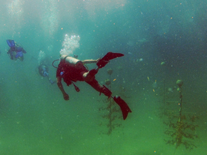 In the News: Wounded Veterans and SCUBAnauts join in reef restoration efforts
