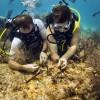 Coral-Vets-SCUBA-Keys-florida