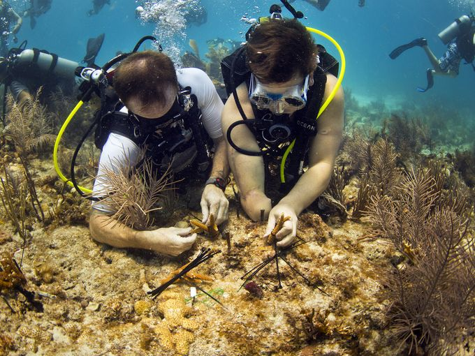 In the news: Wounded vets take on Keys' coral challenge