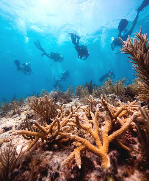 In the news: Veterans and teens partner to plant corals