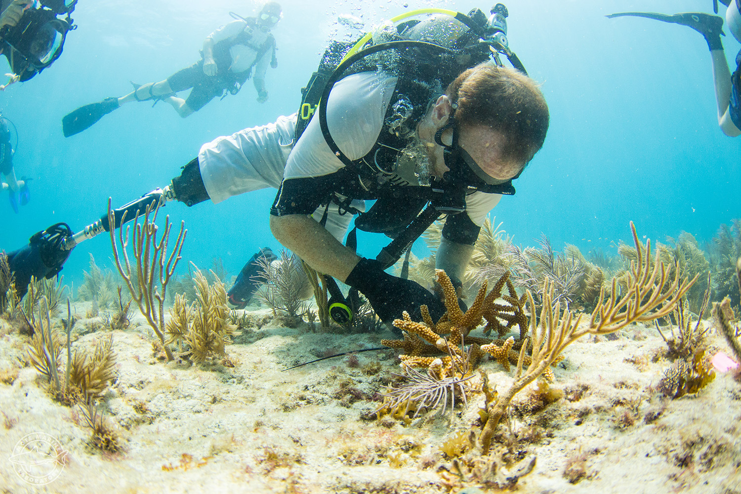 Reef Restoration with SCUBAnauts and MOTE